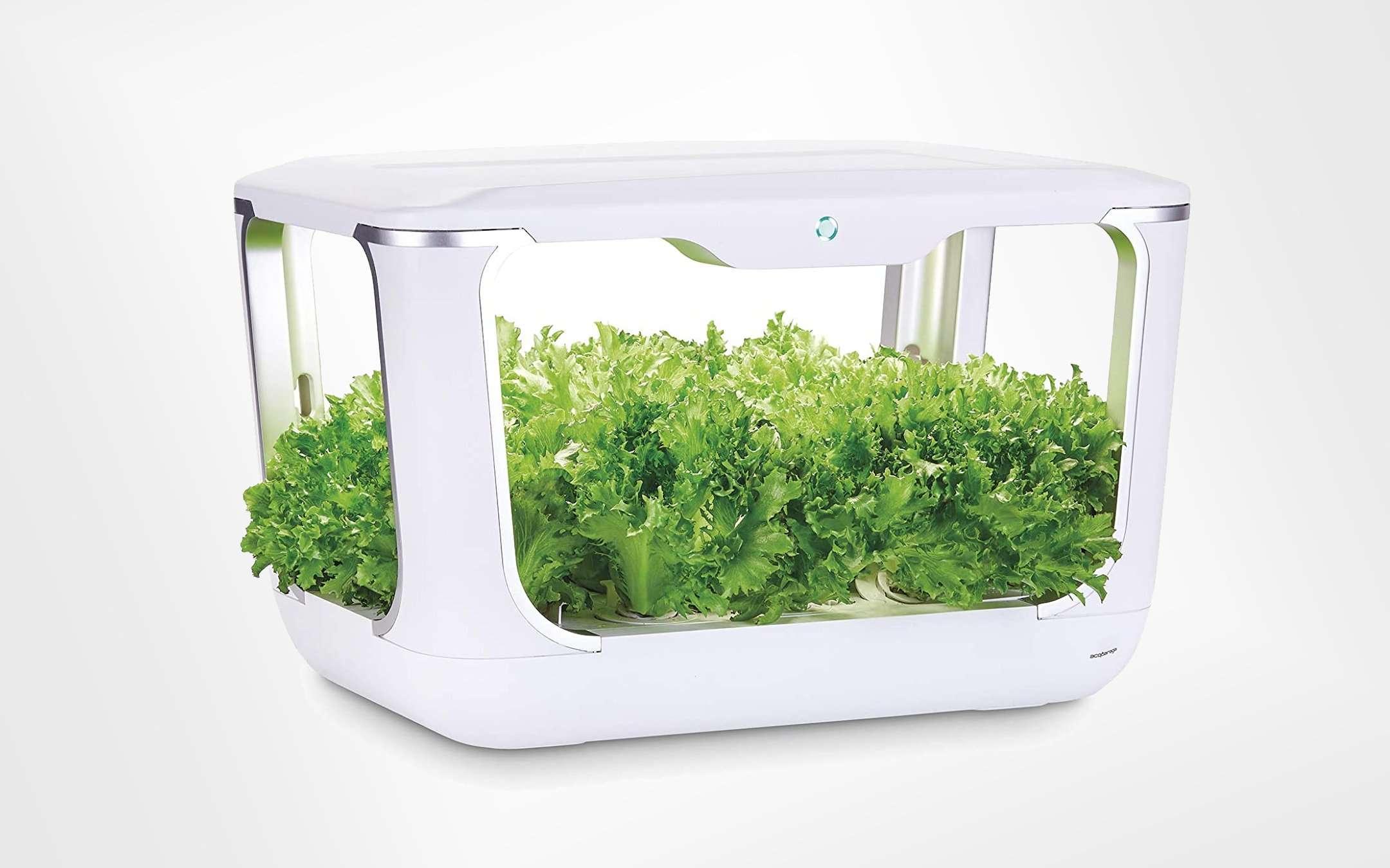 Piccole Serre Da Casa guida all'orto in casa: idroponica, vasi smart, sensori e